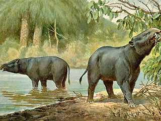 The ancient elephant Moeritherium, as imagined by German naturalist painter Heinrich Harder around 1920.