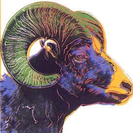 bighorne ram