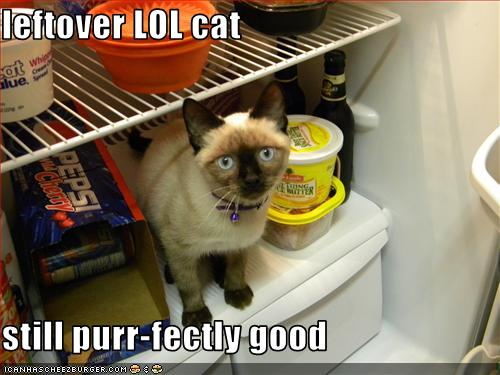 funny-pictures-cat-is-in-fridge4