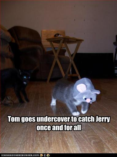 funny-pictures-cat-is-undercover